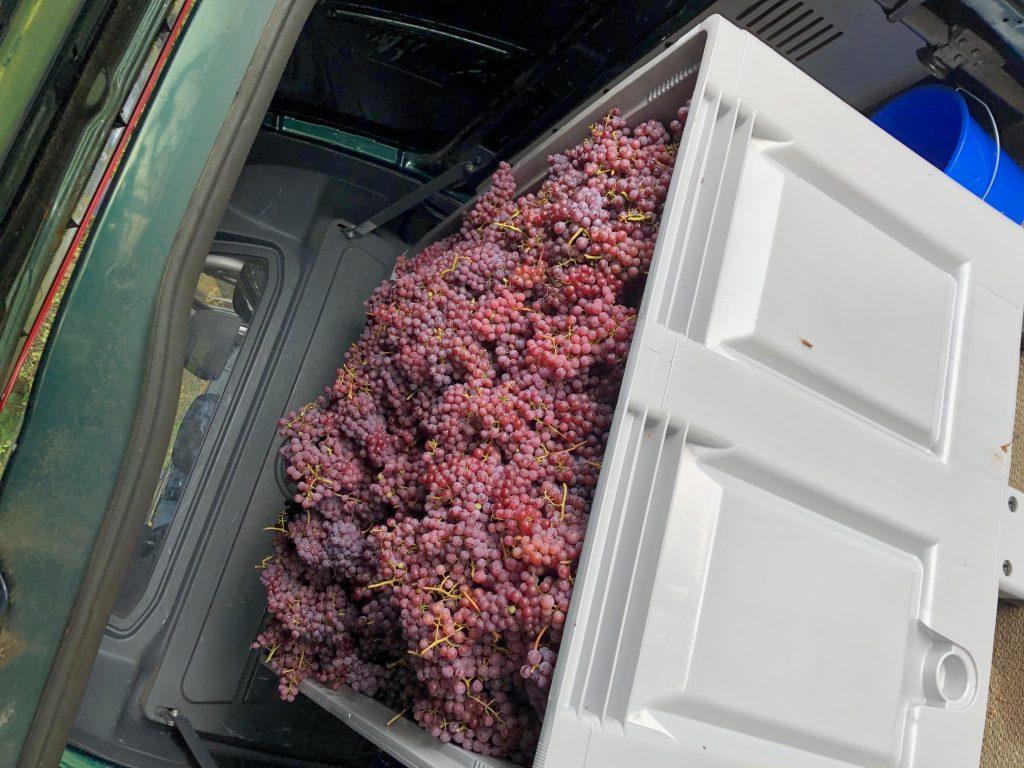 groot-warnsborn-druiven