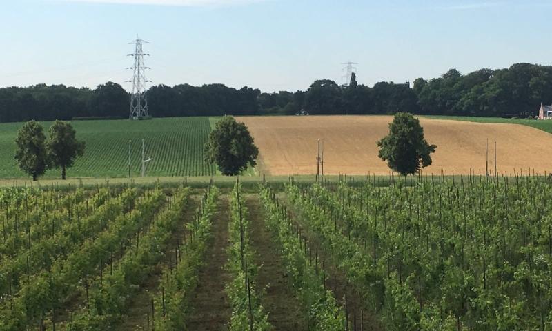 wijngaard-wijn-arnhem
